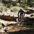 2N10 – 2NY15 – Dick's Trail – Towne Trail